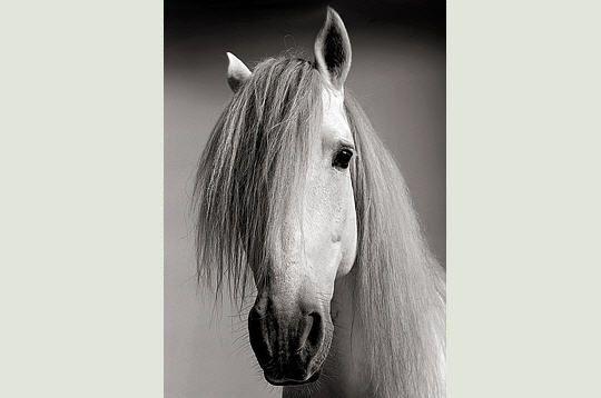 Cheval en noir et blanc - Cheval a imprimer noir et blanc ...